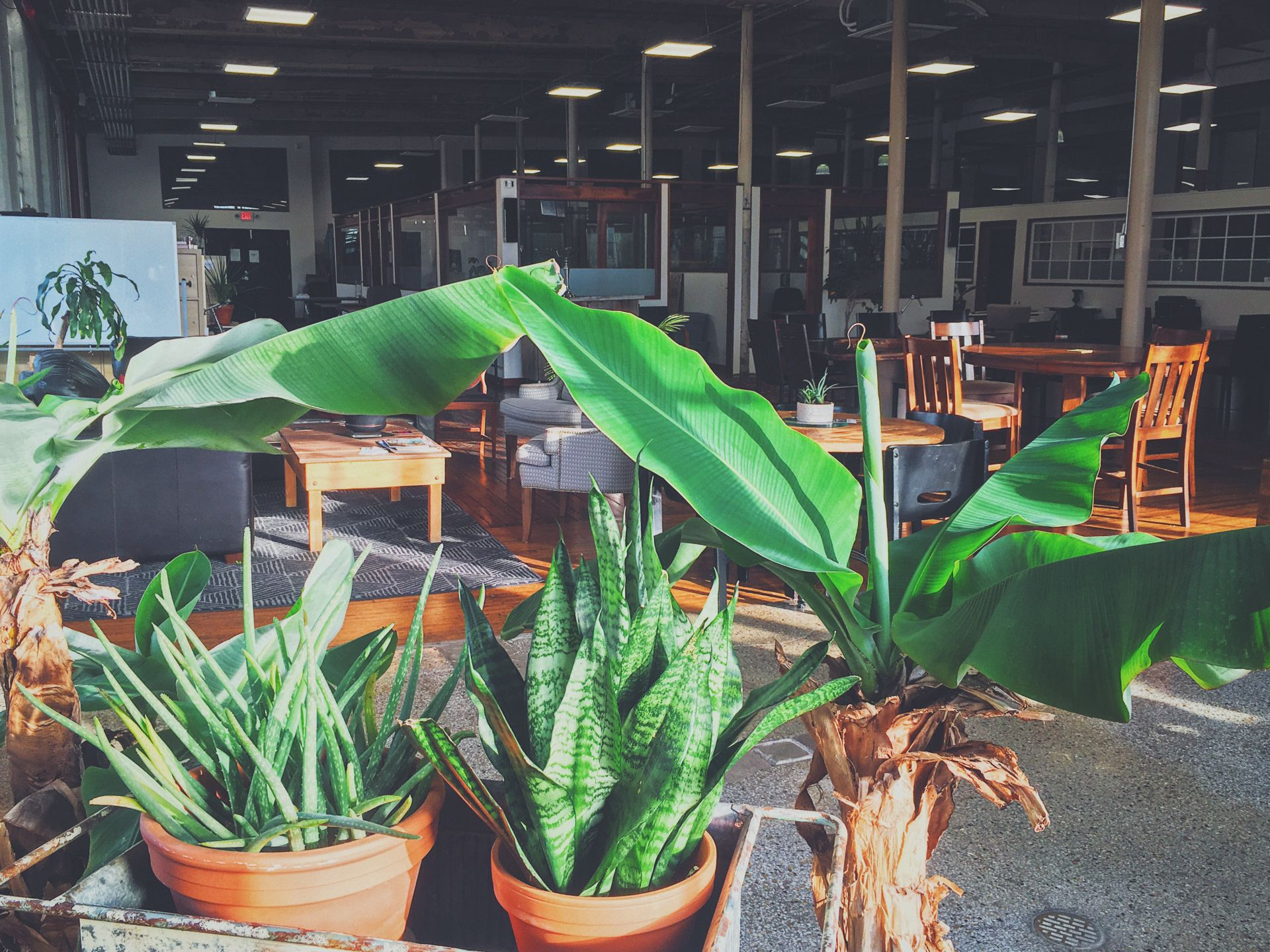 CoWork at the Cotton Factory, Hamilton - Read Reviews & Book