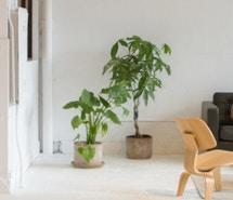 Studio Deli profile image