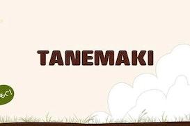 Tane Maki, Kamakura