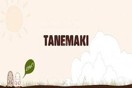 Tane Maki, Ebina
