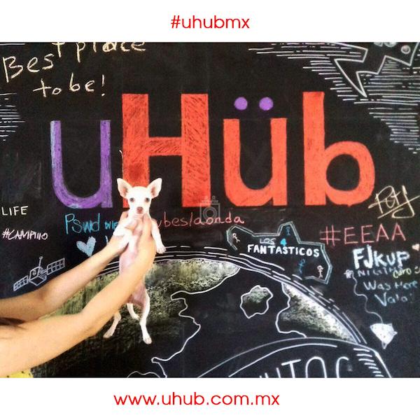 uHub, Chihuahua