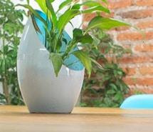 Planta Coworking profile image