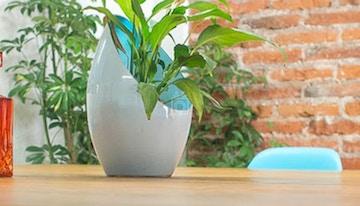 Planta Coworking image 1
