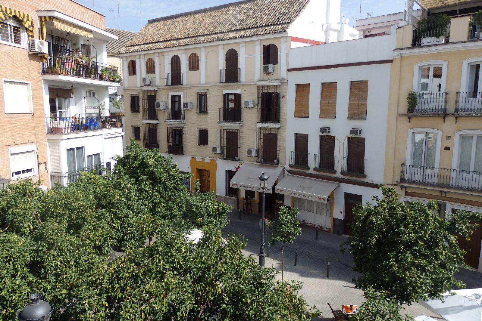 Rojomorgan, Seville