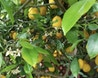 Garden + Lemon Tree Coworking Space image 6