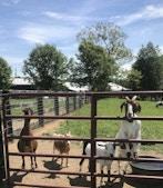 Land O' Goshen Farm & Event Center profile image