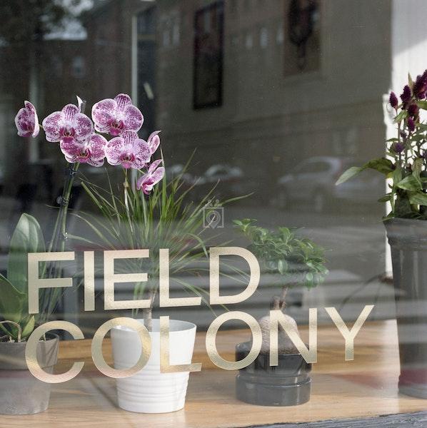 Field Colony, Hoboken