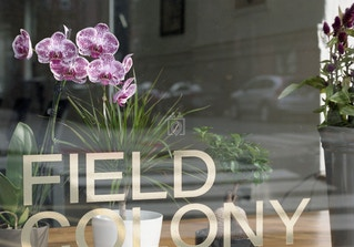 Field Colony image 2