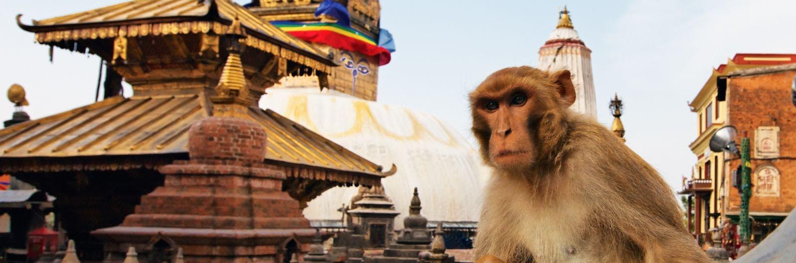 Picture of Kathmandu