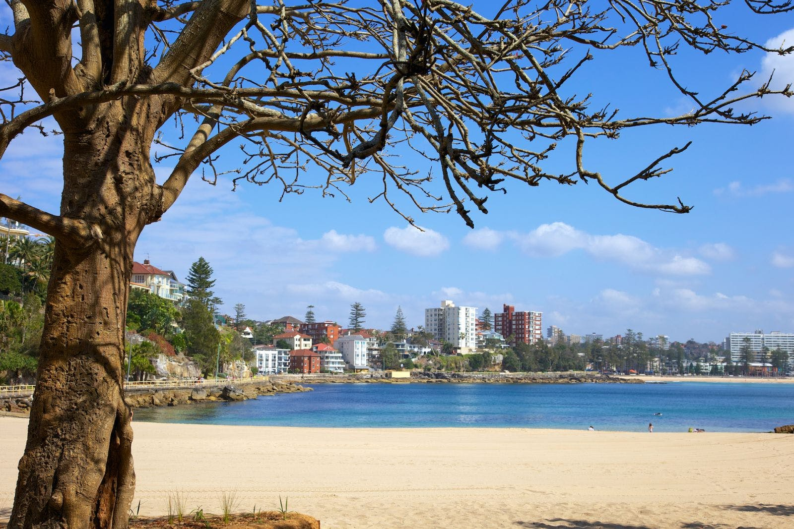Picture of Manly