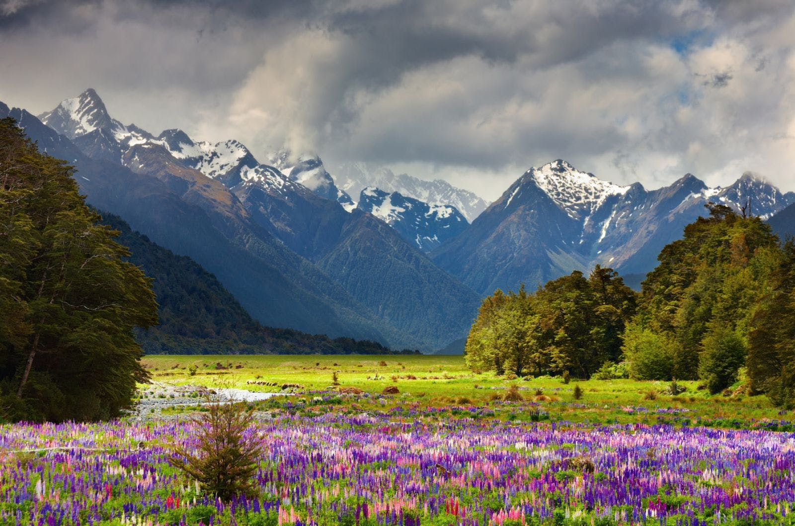 Picture of New Zealand